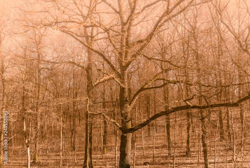 Foto auf AluDibond Ziegel Laubwald, Landschaft im Winter