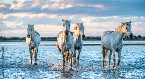 Autocollant pour porte Chevaux White Camargue Horses galloping on the water.
