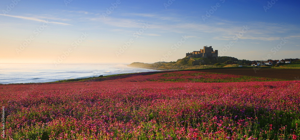 Bamburgh Castle & the pink Campions