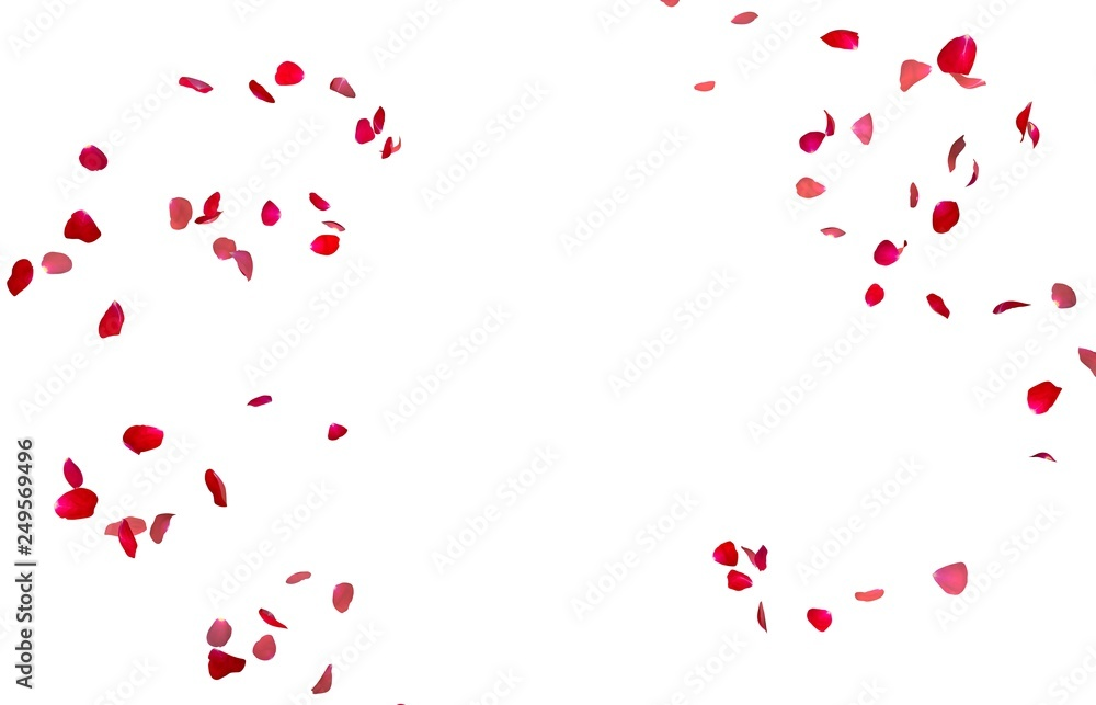 Fototapeta Red rose petals fly in a circle. The center free space for Your photos or text