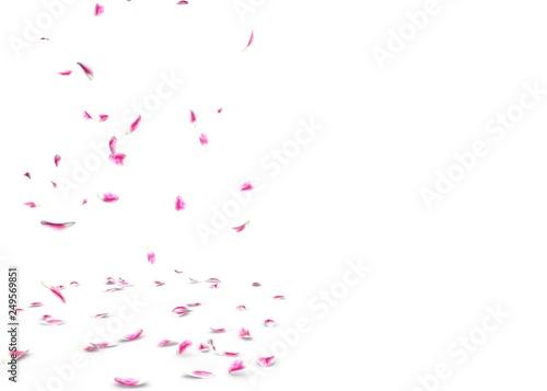 Fotobehang Macrofotografie Tulip petals fall beautifully on the floor