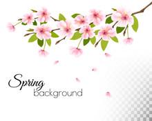 Sakura Japan Cherry Branch Wit...