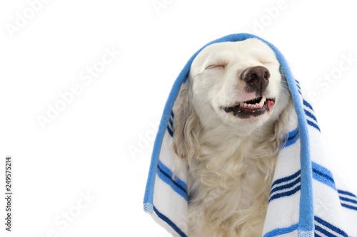 Photo  FUNNY DOG BATHING