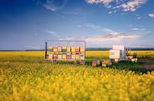 Apiary In Rape Field. Rapeseed Season. Nomadic Beekeepers. Colorful Bee Hives