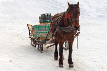 Brown Horse Pulling A Sleigh With Empty Plastic Crates, In Winter. Food And Supplies Distribution For A Mountain Hut In Piatra Mare (Carpathian) Mountains, Romania