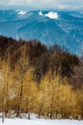 Foto  Scenic Winter landscape with layers of forests and mountain ridges - larch trees in foreground and a snowy peak in the distance