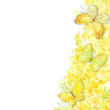 Mimosa And Butterflies On White Background. Festive Spring Floral Decoration. Watercolor Illustration For Greeting Card Or Invitation. Vertical Composition.