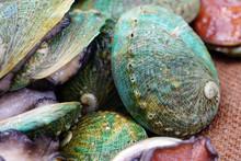 Fresh Green Abalone Shell For ...