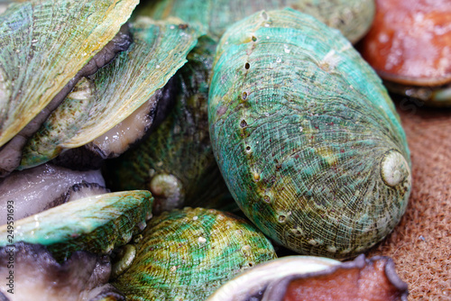 Photo Fresh green abalone shell for sale at a fish market in Sydney, Australia