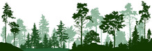 Forest Silhouette Trees. Everg...