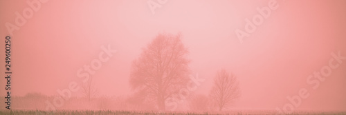 Foto op Canvas Koraal Landscape with trees in the pink fog on the meadow.