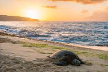 Sea Turtle On Sunset Beach 2