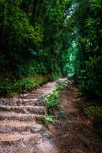 Manoa Falls Stairs