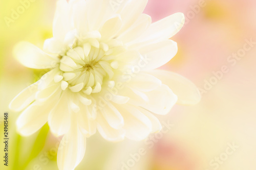A beautiful white flower on a yellow blurred background. Tapéta, Fotótapéta