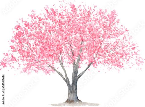 Stampa su Tela 桜の木 水彩イラスト