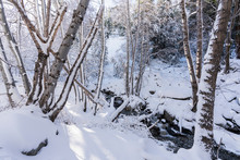 Fresh Winter Snow Covering Ice House Canyon Trail And Creek In The San Gabriel Mountains Near Mt. Baldy And Los Angeles In Southern California.