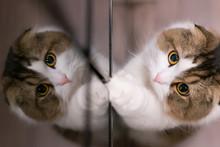 映り込んだ猫