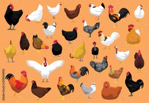 Fotografia Various Chicken Breeds Poultry Cartoon Vector Illustration
