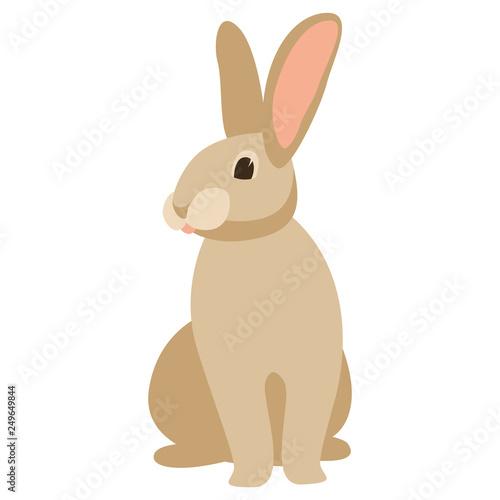 Fotografia cartoon rabbit, vector illustration ,  front