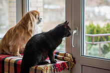 Pets Waiting His Owner. Concept Of Domestic Animals, Lifestyle And Problems