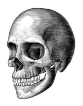 Antique Of Human Skull Vintage Engraving Illustration Isolated On White Background