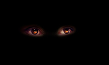 The Hidden Animal In The Dark, Universe Eyes On A Black Background, The Mysterious Stranger