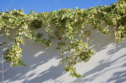 Muro Con Edera Rampicante E Cielo Azzurro Buy This Stock Photo And