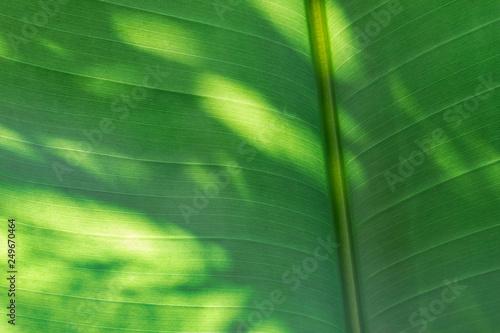 Fotografija  Foglia verde in controluce