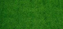 Grass Field Background, Green ...