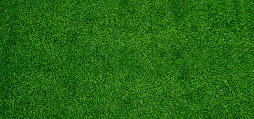 pozadina travnatog polja, zelena trava, zelena pozadina