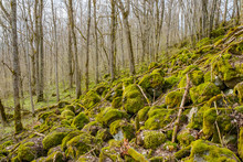 Stone Felsenmeer At Slope Covered With Green Moss In The Woodland