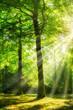 Leinwandbild Motiv Grüner Wald im Sonnenlicht