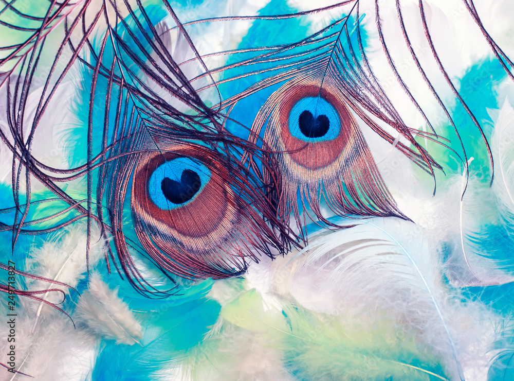 natural background of beautiful peacock tail lie on a variety of other light and airy feathers of different colors