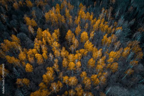 Foto auf Gartenposter Schwarz Autumn forest aerial drone view