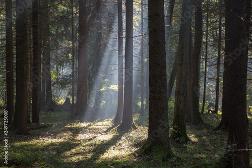 Foto  Sunbeam entering rich deciduous forest
