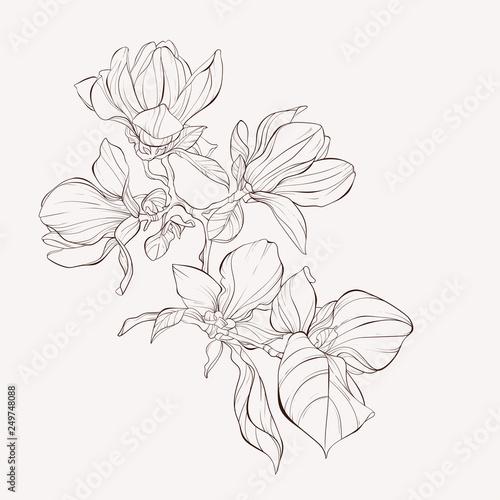Sketch Floral Botany Collection Fototapeta