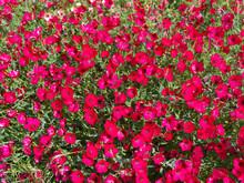 Bouquet De Fleurs Rouges Dans ...