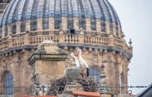 Breeding Storks Happily Nesting In The Majestic Settings Of The The Convento De San Esteban (St. Stephen Monastery) In The Middle Of The Winter In Salamanca, Castile-Leon, Spain.