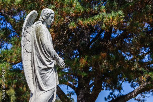 A Stone Angel at Saint Mary's Cemetery