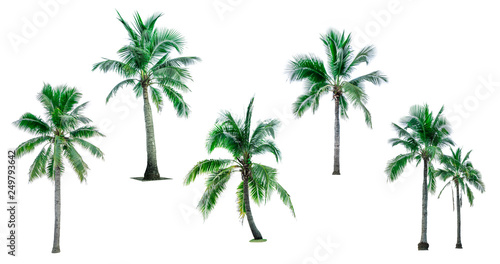 Foto auf AluDibond Palms Coconut tree isolated on white background with copy space. Used for advertising decorative architecture. Summer and beach concept