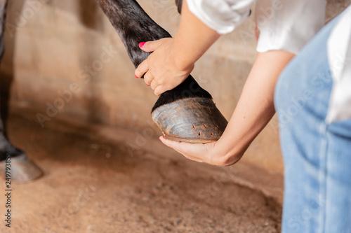 Carta da parati Veterinarian examining horse leg tendons