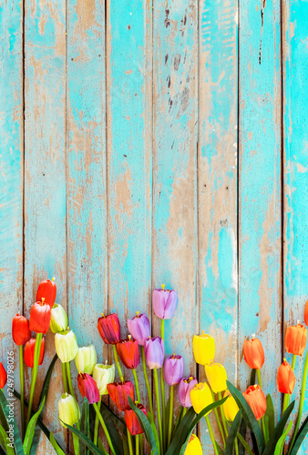 Obraz Tulip blossom flowers on vintage wooden background, border  frame design. vintage color tone - concept flower of spring or summer background - fototapety do salonu