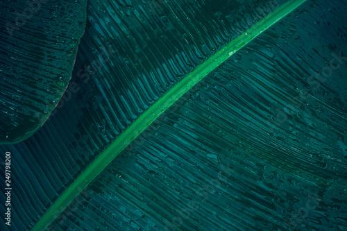 Zakończenie ulistnienie tropikalny liść w ciemnozielonej z podeszczowej wody kropli teksturą, abstrakcjonistyczny natury tło.