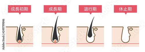 Obraz 脱毛の毛周期シンプルかわいい説明図イラスト - fototapety do salonu