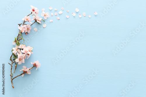 Canvas Print photo of spring white cherry blossom tree on pastel blue wooden background