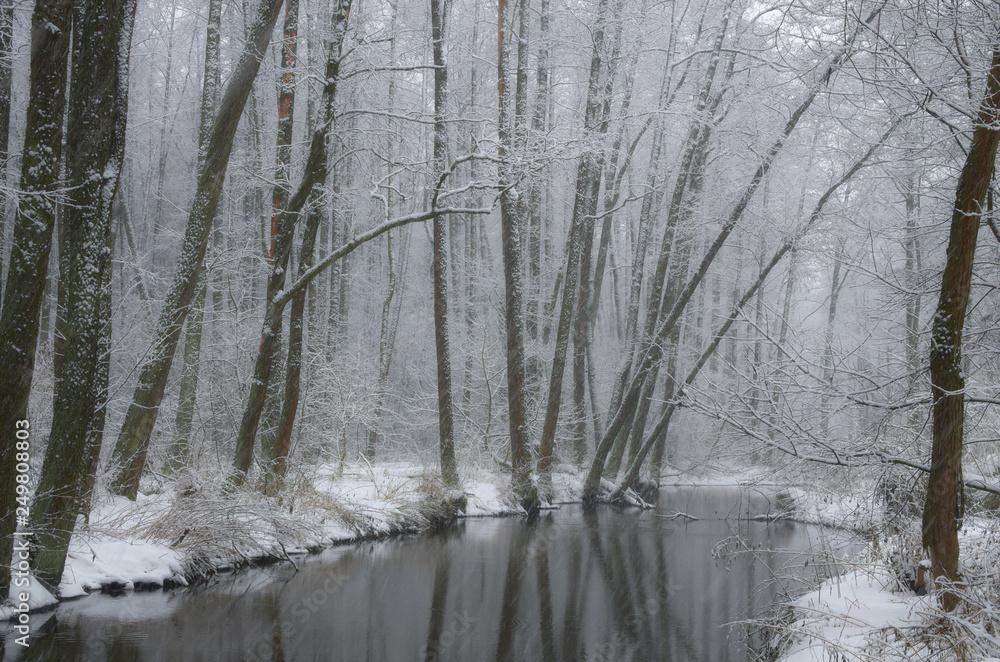Fototapeta Zimowy brzeg