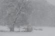 Śnieżne drzewo
