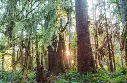 Rain forest Canvas-taulu