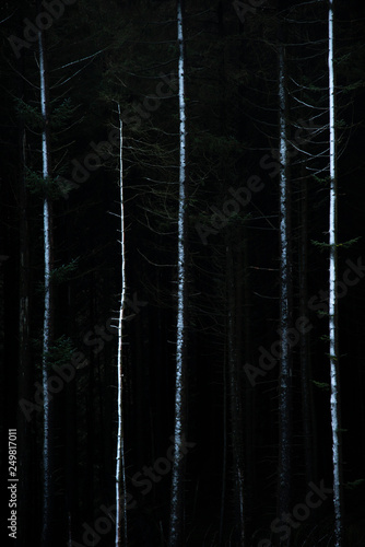 Tuinposter Fantasie Landschap Stunning fine art landscape image of Winter forest landscape in Peak District in England with snow dusting tree branches