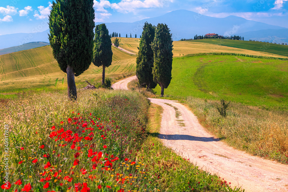 Fototapety, obrazy: Summer Tuscany landscape with grain fields and rural road, Italy